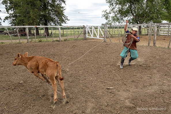 Gaucho working with cattle - Argentina : michael coyne documentary photographer and photojournalist