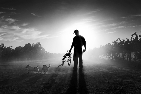 michael coyne documentary photographer and photojournalist: A farmer with his dogs - Australia