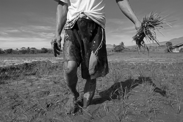michael coyne documentary photographer and photojournalist: Rice planting - Philippines