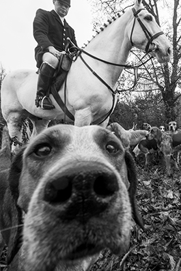 Dogs ready for a hunt in County Tipperary, Ireland : michael coyne documentary photographer and photojournalist